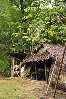 Bidayuh village