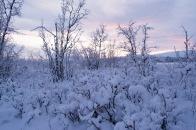 Moose safari, Kiruna