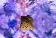 Skansen's aquarium