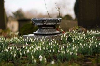 Snowdrops at St Edmund's church