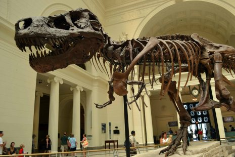 Sue at the Field museum !