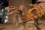 Field museum, dinosaur hall