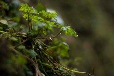 Interesting vegetation near the Devil's arse