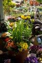 Grasmere Garden Village