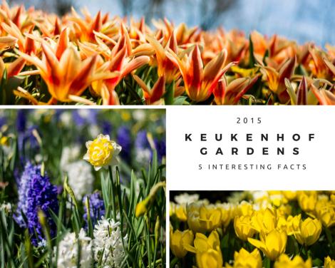 5 interesting facts about Keukenhof Gardens