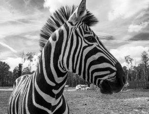 Safari Park, Monde Sauvage