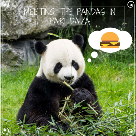 Meeting the pandas in Pairi Daiza