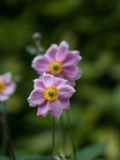 Valley Gardens in Harrogate