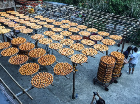 drying persimmon in Xinpu